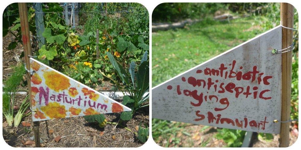 collage mullum comm garden perm 3