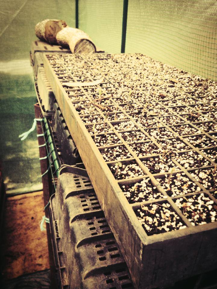 future feeders seedlings