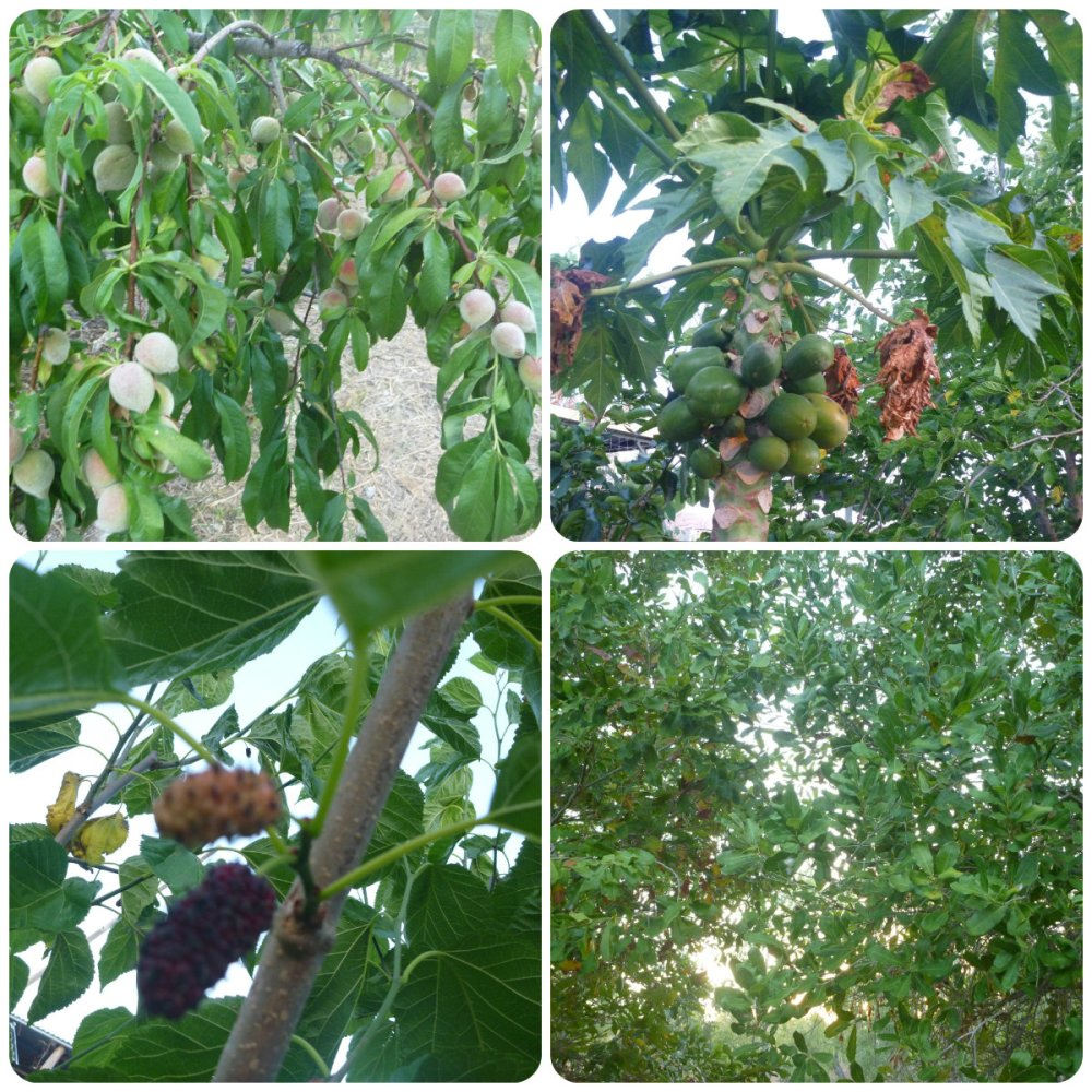 collage Sat Chit Ananda trees
