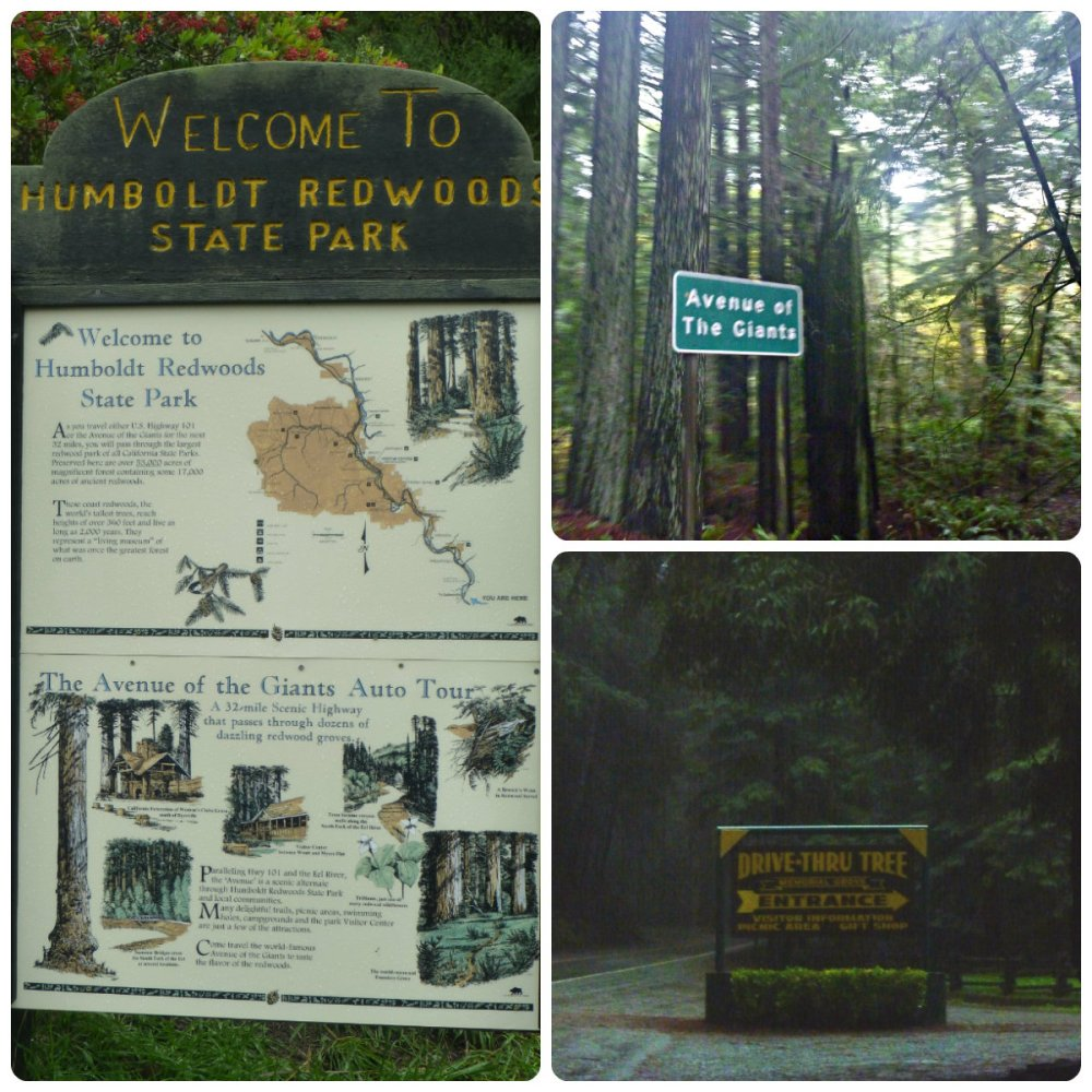 collage redwood signs