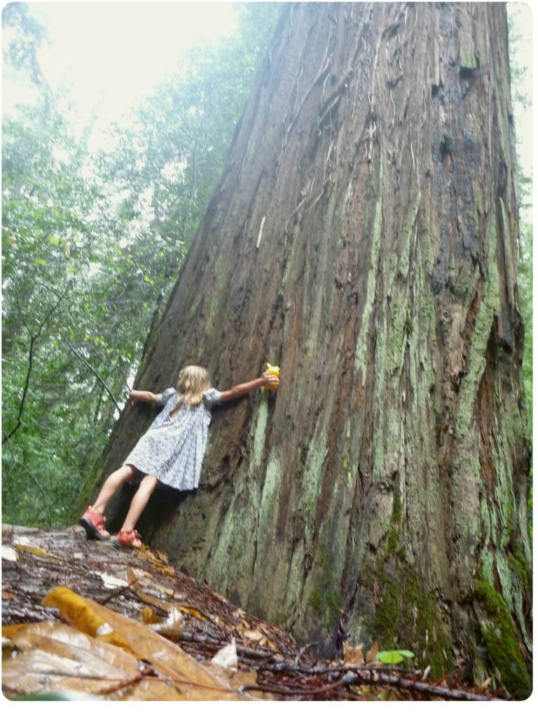 emma hug tree redwoods