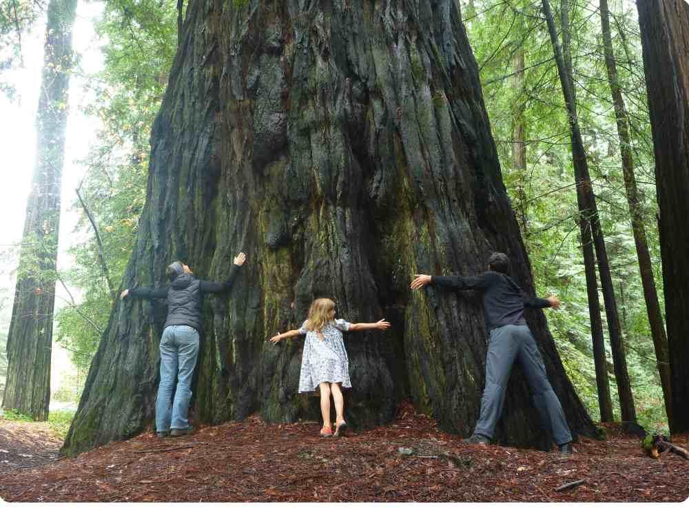 mic mel emma hug tree redwoods