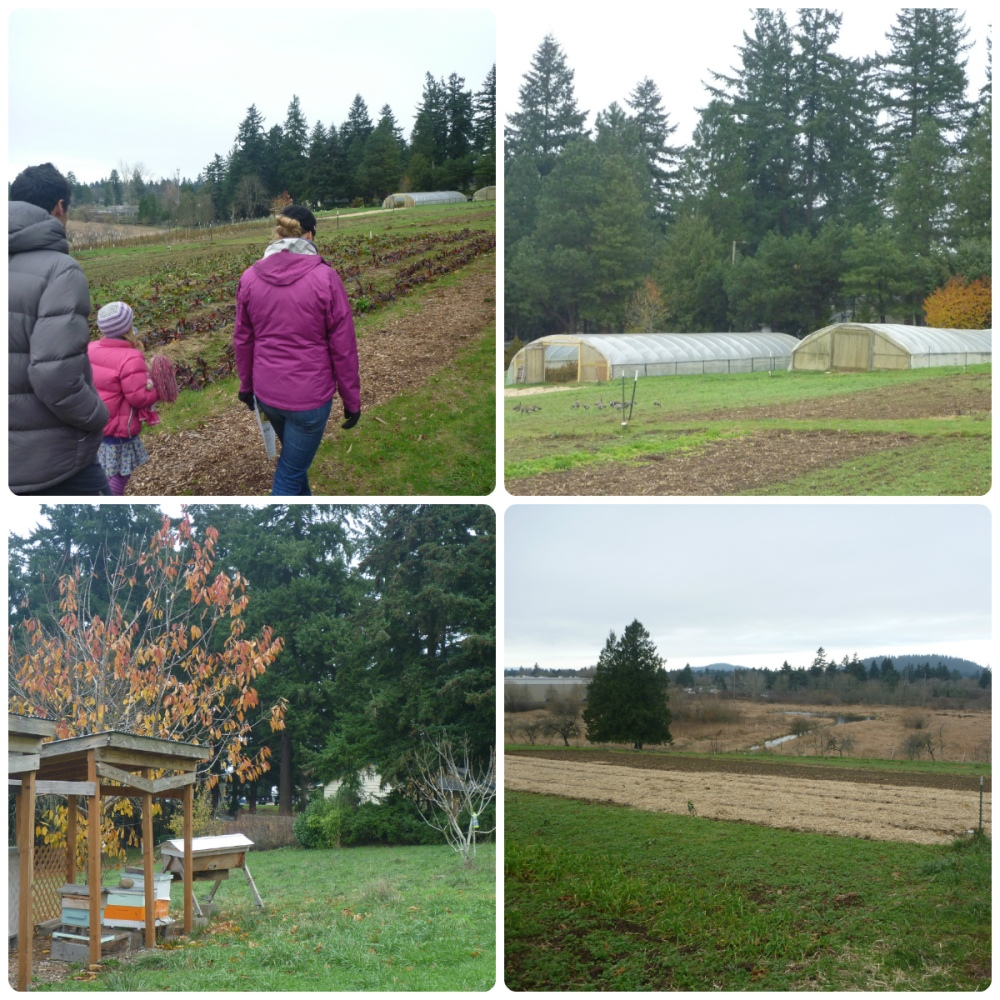 collage zenger farm 2