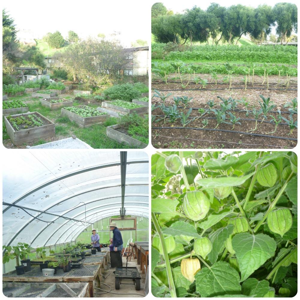 collage Alemany Farm 1