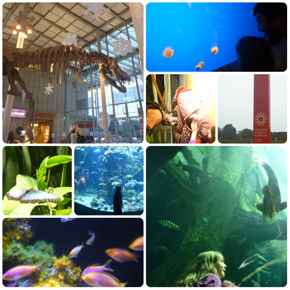 collage cal academy