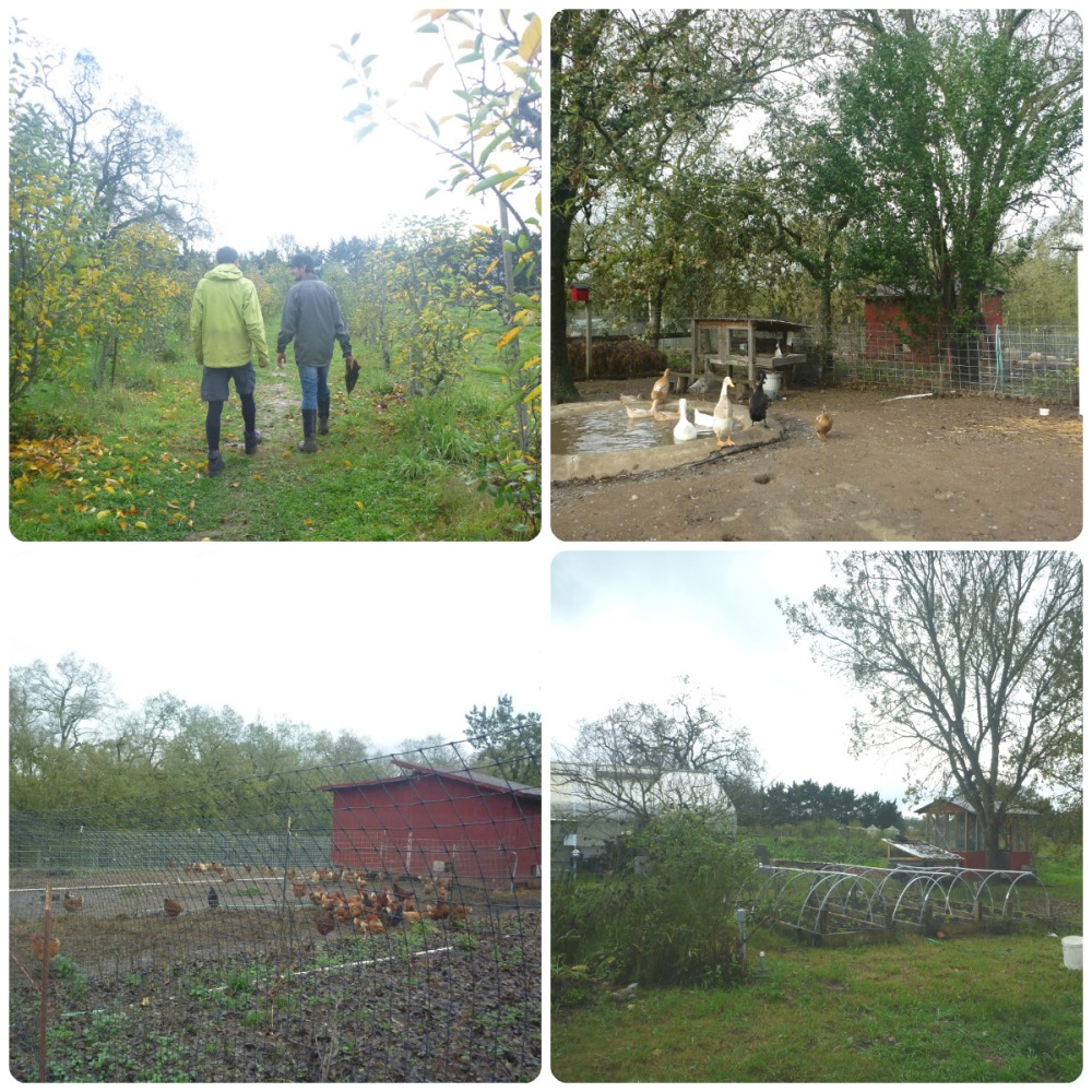 collage farm walk